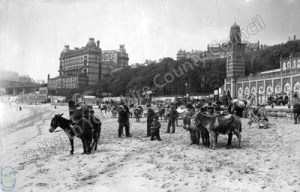 Donkeys at South Sands, Scarborough